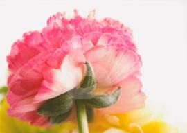 FotoEigenArt - Bloemendetail