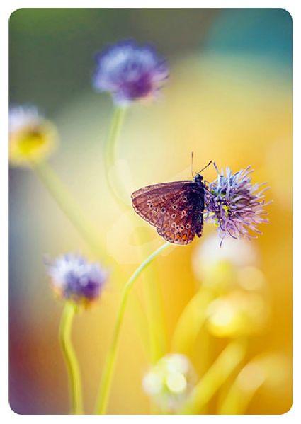 Trevillion Images -  Vlinder