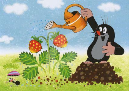 Het Molletje - Aardbeien water geven