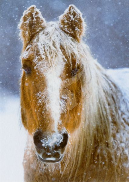 Getty Images - Paard in de winter