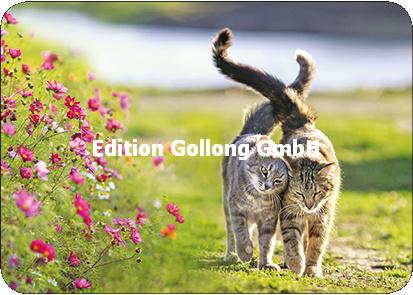 AdobeStock - Twee katten