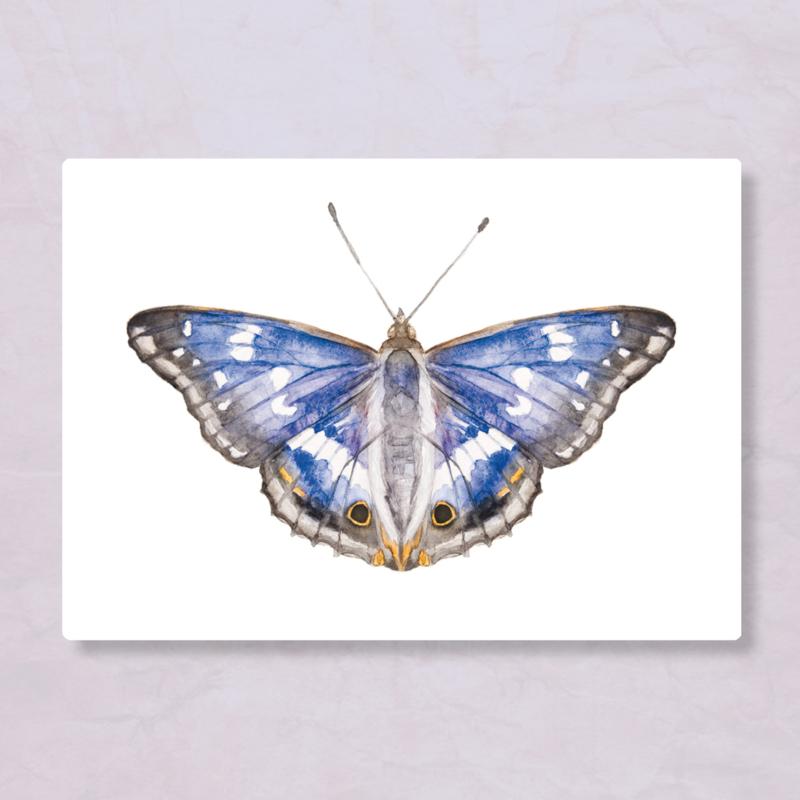 Veer Illustratie - Grote weerschijnvlinder