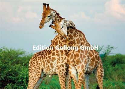 Tim Booth - Giraffe