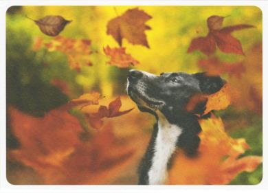 EyeEm - Herfstvreugde (Hond)