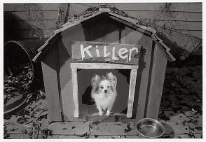 Editions du Désastre - Beware of Small Killer Dog