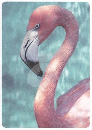 Mauritius Images - Flamingo