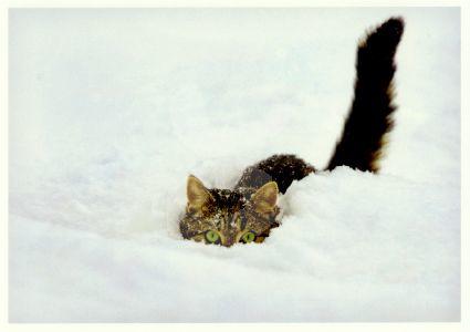 Okapia - Kat in de sneeuw