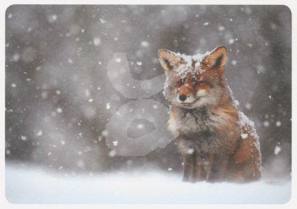 Buiten Beeld - Sneeuwpret (Vos)