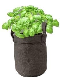 Herbs in Jutebag Basilicum