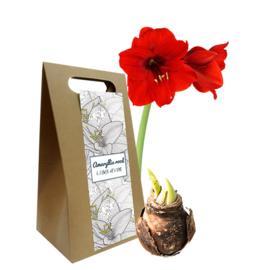 Giftbox Met Amaryllis