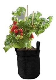 Herbs in Jutebag Tomato