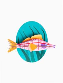 Studio ROOF - Longnose Hawkfish