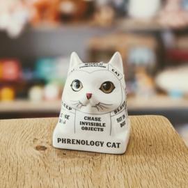 Phrenology Cat