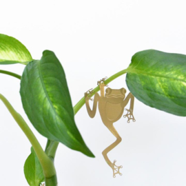Another Studio - Plant Animal Frog