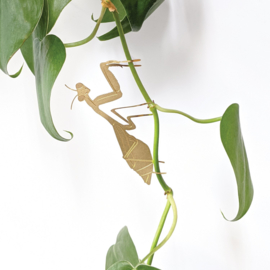 Another Studio - Plant Animal Praying Mantis