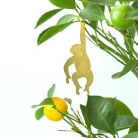 Another Studio - Plant Animal Chimpanzee