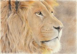 Leeuw, de originele tekening