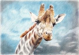 Giraffe, de originele tekening