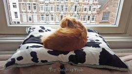 Zebra-Cow Dubbelzijdige Kussenbedslopen voor Kleine Honden