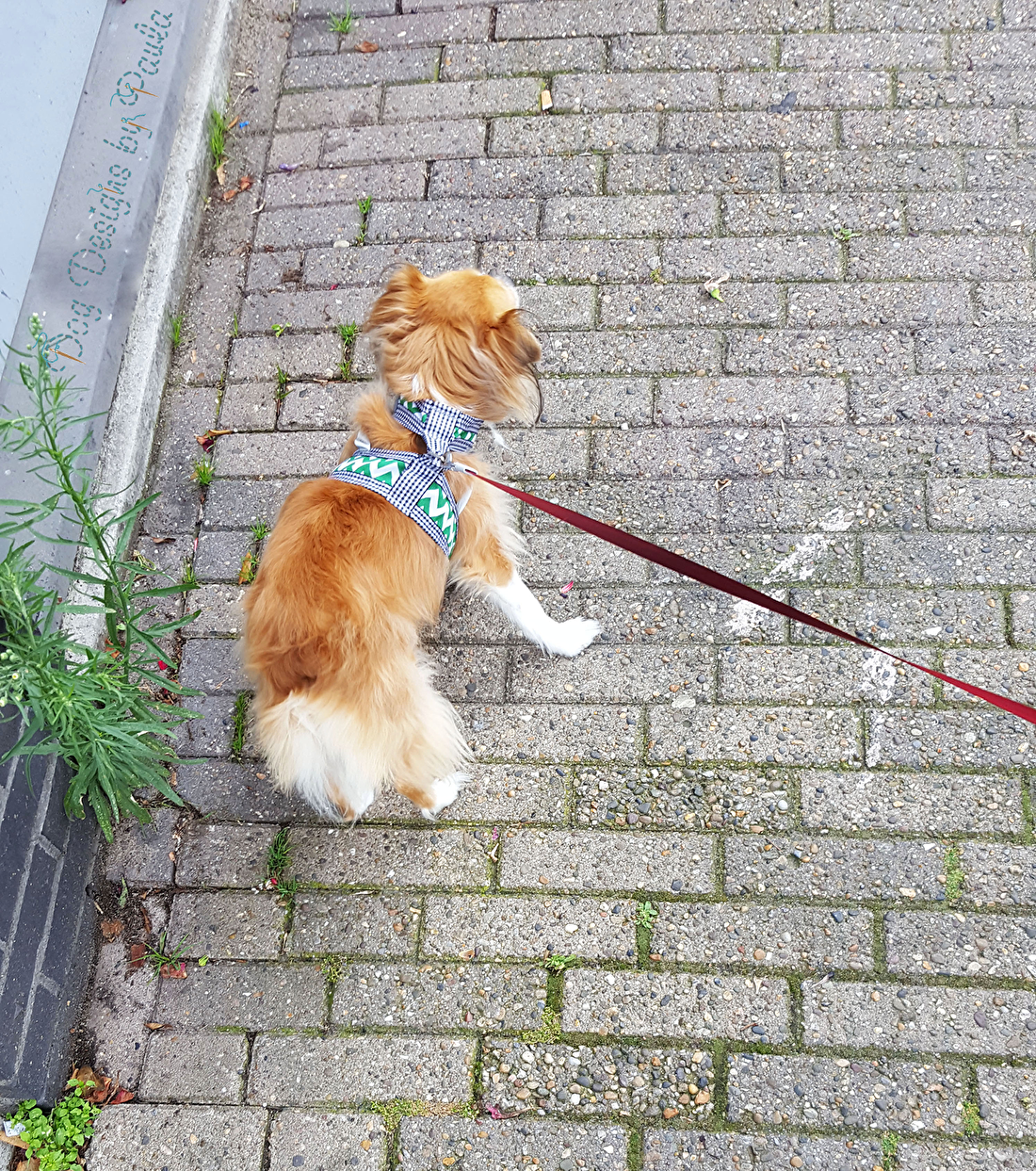 Waarom Tuigjes beter zijn voor Kleine Honden? Dog Designs by Paula