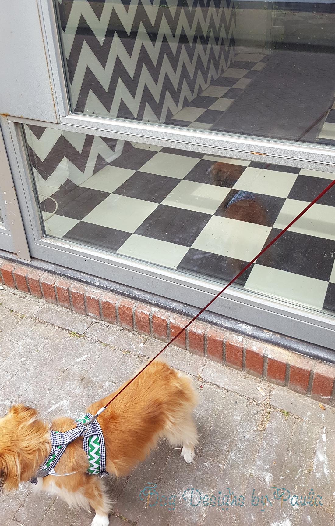 Over Straat Lopen met eenexclusieve Dog Designs by Paula's Tuigje