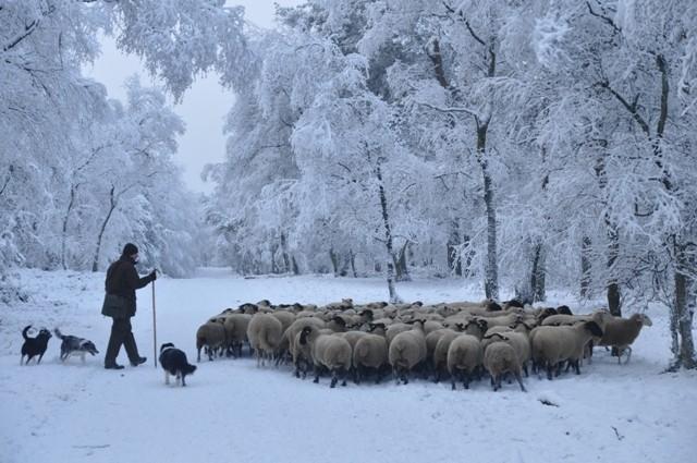 Schaapskudde Elspeet met beide herders
