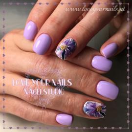 paarse bloem 1-183