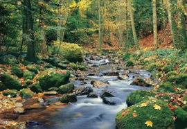 Foto behang Forest Stream 00278