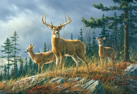 Foto behang Autumn Whitetails 00151