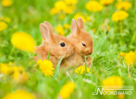 Foto behang Rabbit Field Noordwand