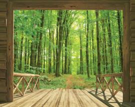 Foto behang Woodland Forrest 43572