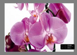 Foto behang Paarse Orchideeën FTS0049