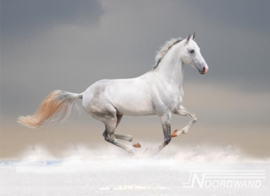 Foto behang Horsepower Noordwand