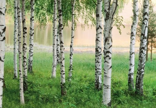Foto behang Nordic Forest 00290