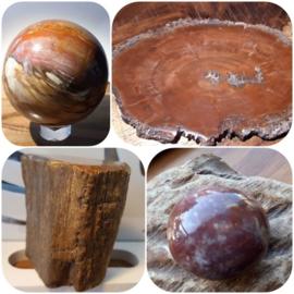 Blog Paranormaal Alternatief Versteend hout
