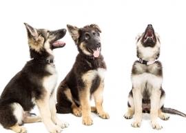 Puppycoaching