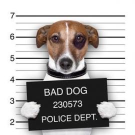 Hondengedragstherapie