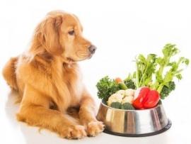 Lezing voedingsadvies