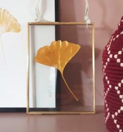 Gouden Ginkgo blad in vintage messing lijst - MEDIUM