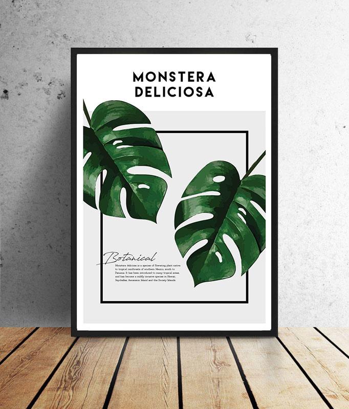 Botanische poster - Monstera Deliciosa