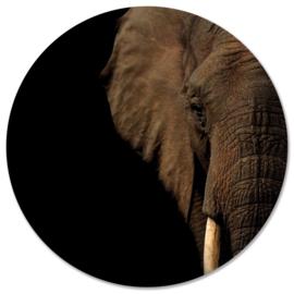 Olifant hoofd 20 cm