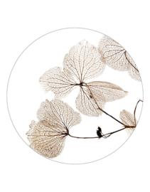 Muurcirkel wit met gedroogde bladen 20 cm