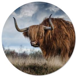 Buffel 20 cm