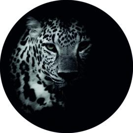Wandcirkel Cheetah (foto) 20 cm