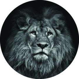 Wandcirkel Leeuw (Foto) leeuw 20 cm