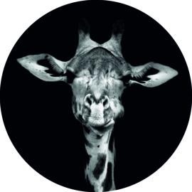 Wandcirkel giraffe (foto) 20 cm