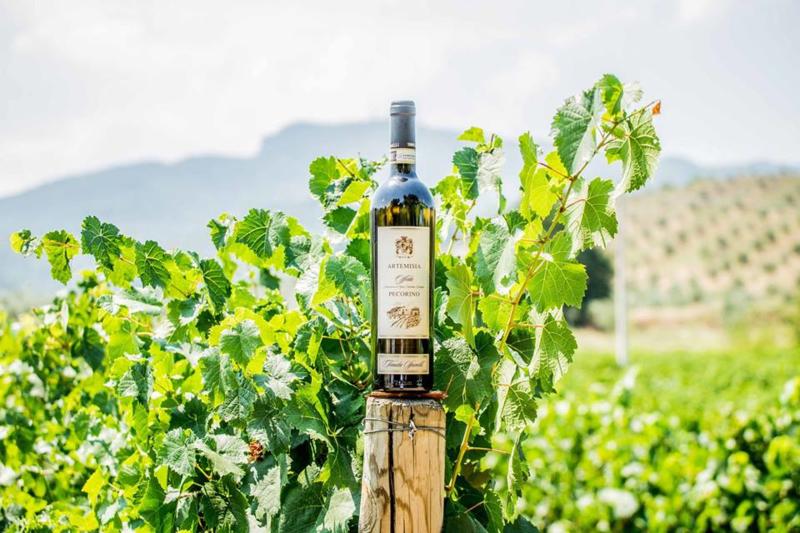 Tenuta Spinelli I Artemisia Offida Pecorino DOCG  I 6 flessen