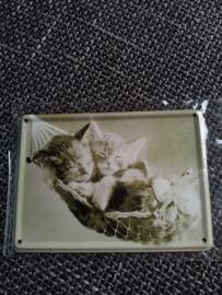 Metaalplaatje katten 8 x 11 cm
