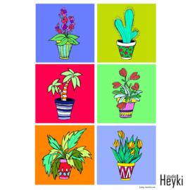 Plant - Zes potjes bij elkaar - XL
