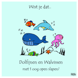 Wist je dat - Walvis